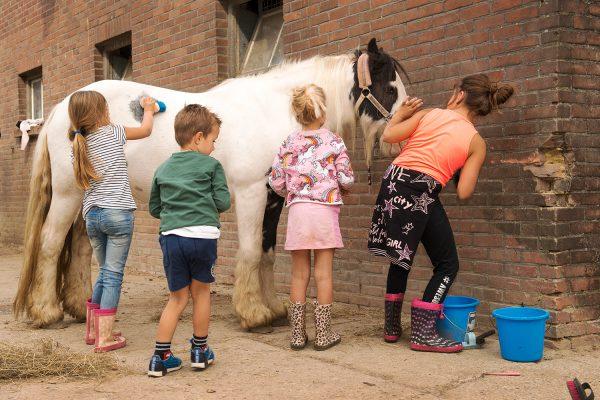 Leren hoe je een paard moet verzorgen bij ponyclub De Verlorenkost Gulpen Zuidlimburg